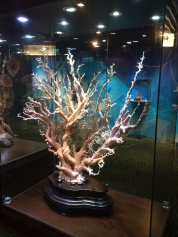 World's tallest gemstone coral